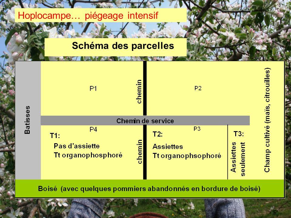 Schéma des parcelles Hoplocampe… piégeage intensif P1P1 P4P4