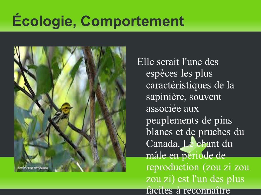 Écologie, Comportement Elle serait l'une des espèces les plus caractéristiques de la sapinière, souvent associée aux peuplements de pins blancs et de