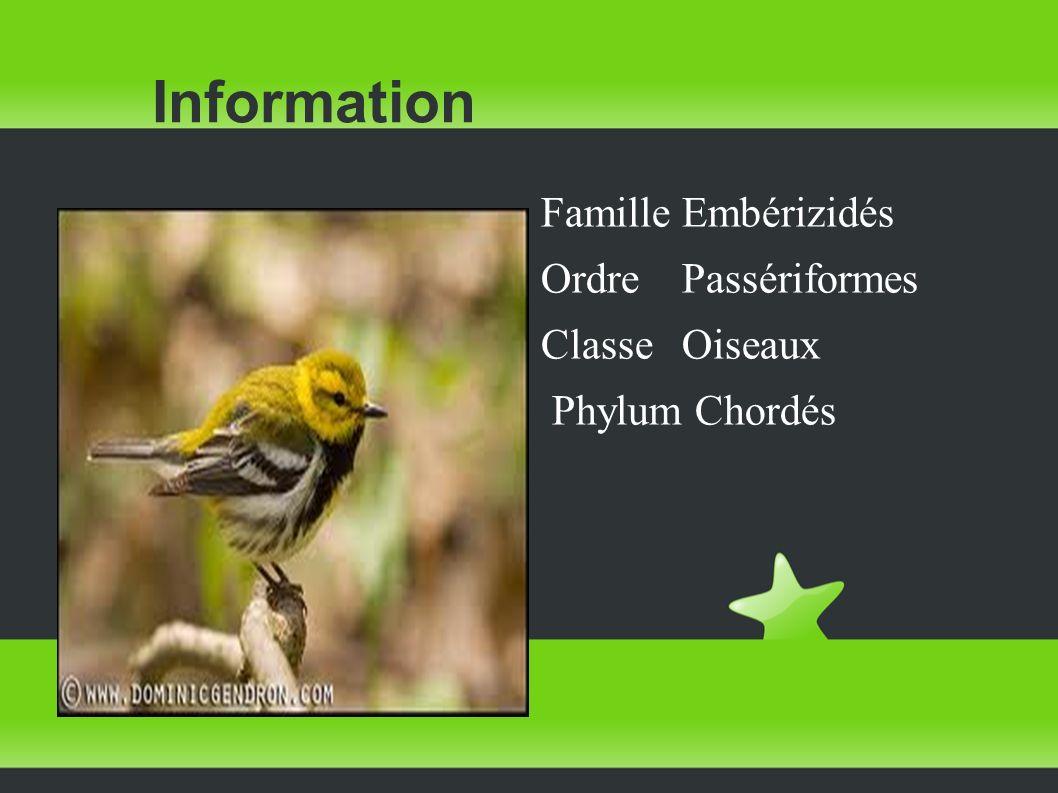 Information FamilleEmbérizidés OrdrePassériformes ClasseOiseaux Phylum Chordés
