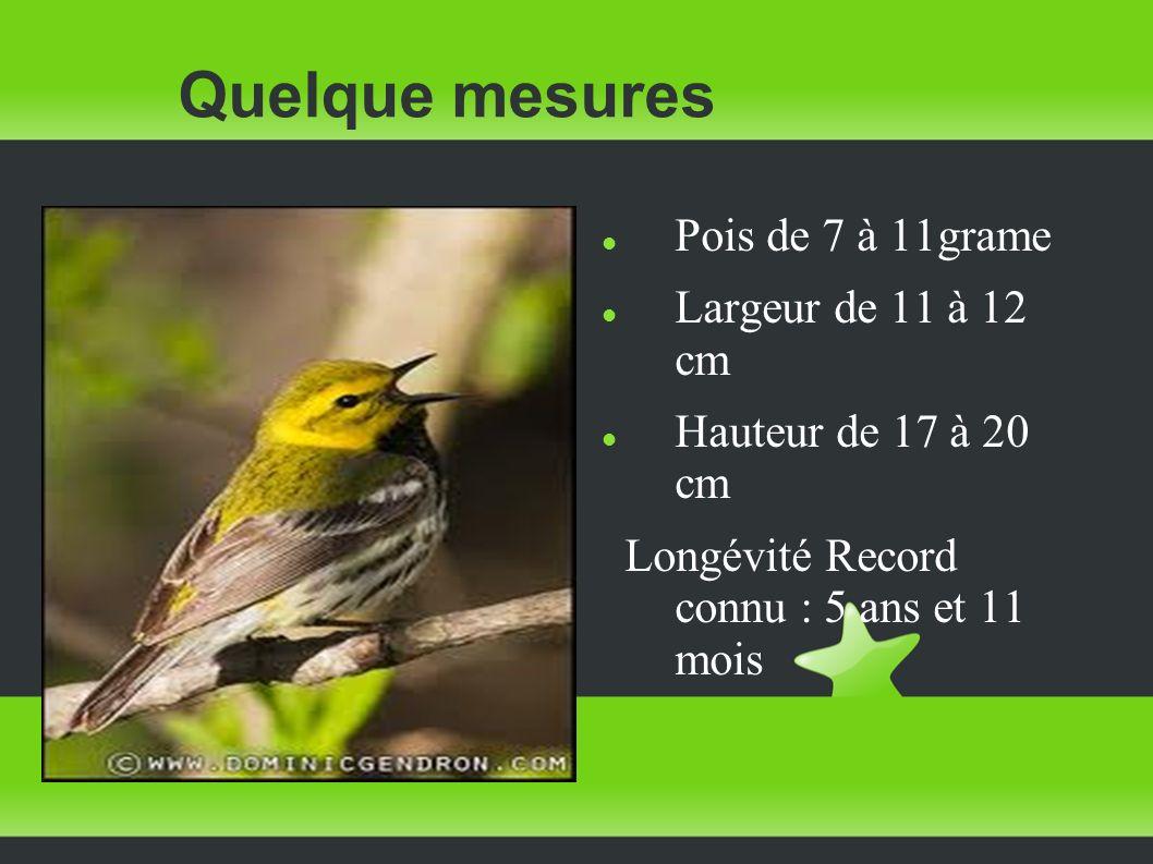 Quelque mesures Pois de 7 à 11grame Largeur de 11 à 12 cm Hauteur de 17 à 20 cm Longévité Record connu : 5 ans et 11 mois