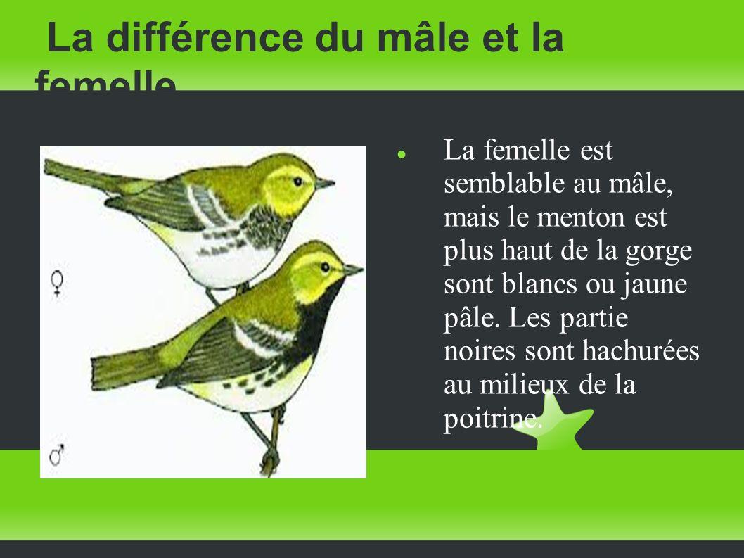 La différence du mâle et la femelle La femelle est semblable au mâle, mais le menton est plus haut de la gorge sont blancs ou jaune pâle. Les partie n