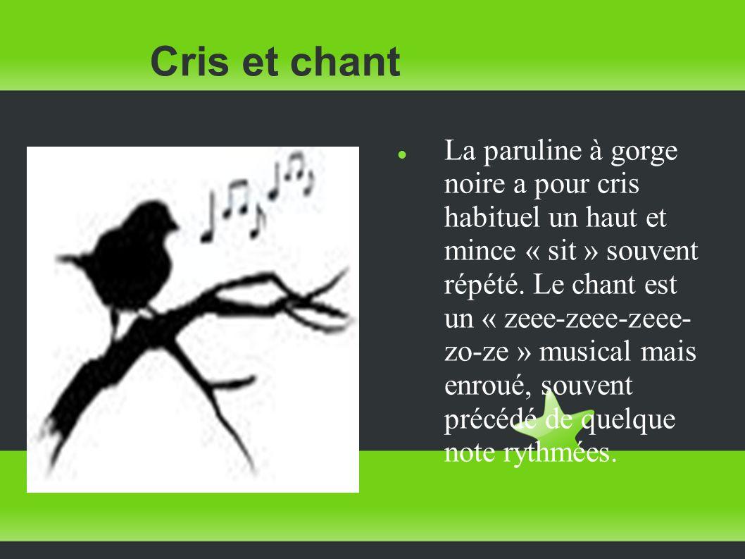 Cris et chant La paruline à gorge noire a pour cris habituel un haut et mince « sit » souvent répété. Le chant est un « zeee-zeee-zeee- zo-ze » musica