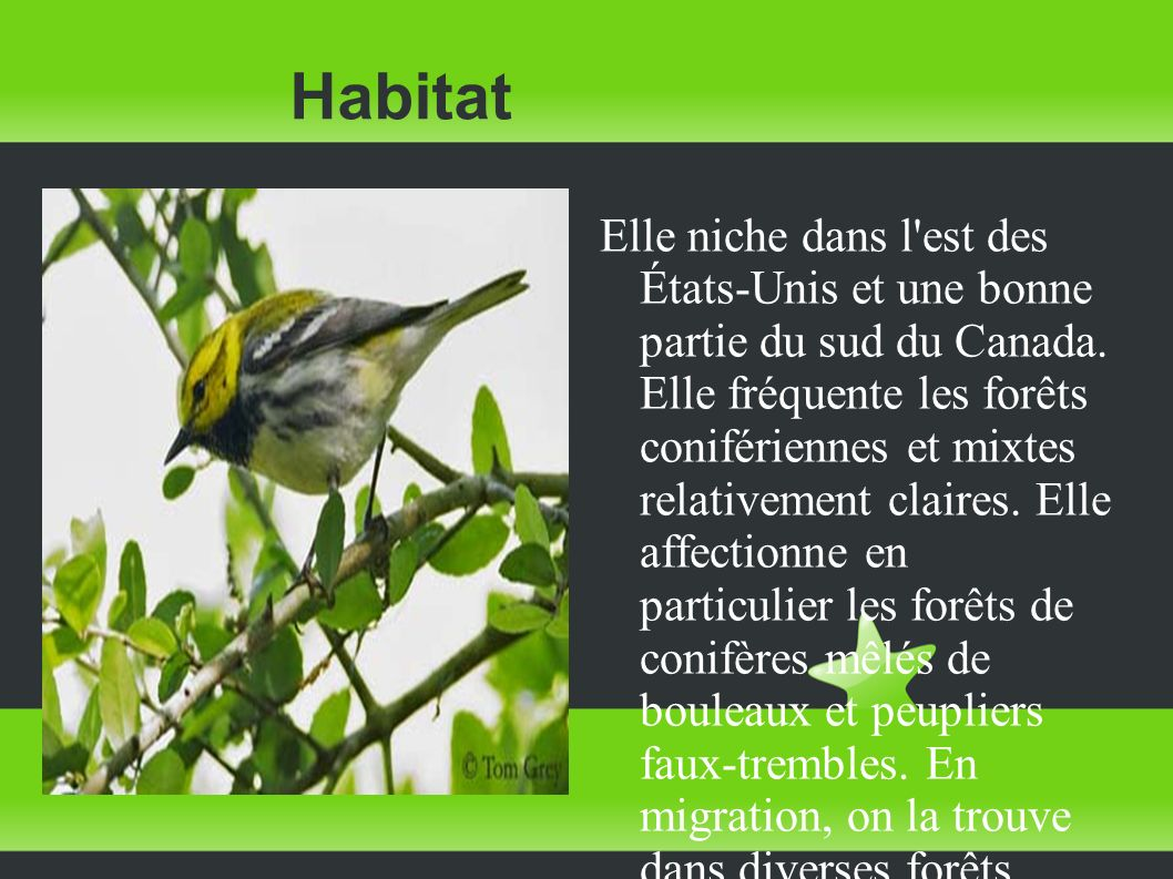Habitat Elle niche dans l'est des États-Unis et une bonne partie du sud du Canada. Elle fréquente les forêts conifériennes et mixtes relativement clai