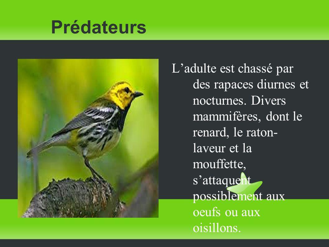 Prédateurs Ladulte est chassé par des rapaces diurnes et nocturnes. Divers mammifères, dont le renard, le raton- laveur et la mouffette, sattaquent po