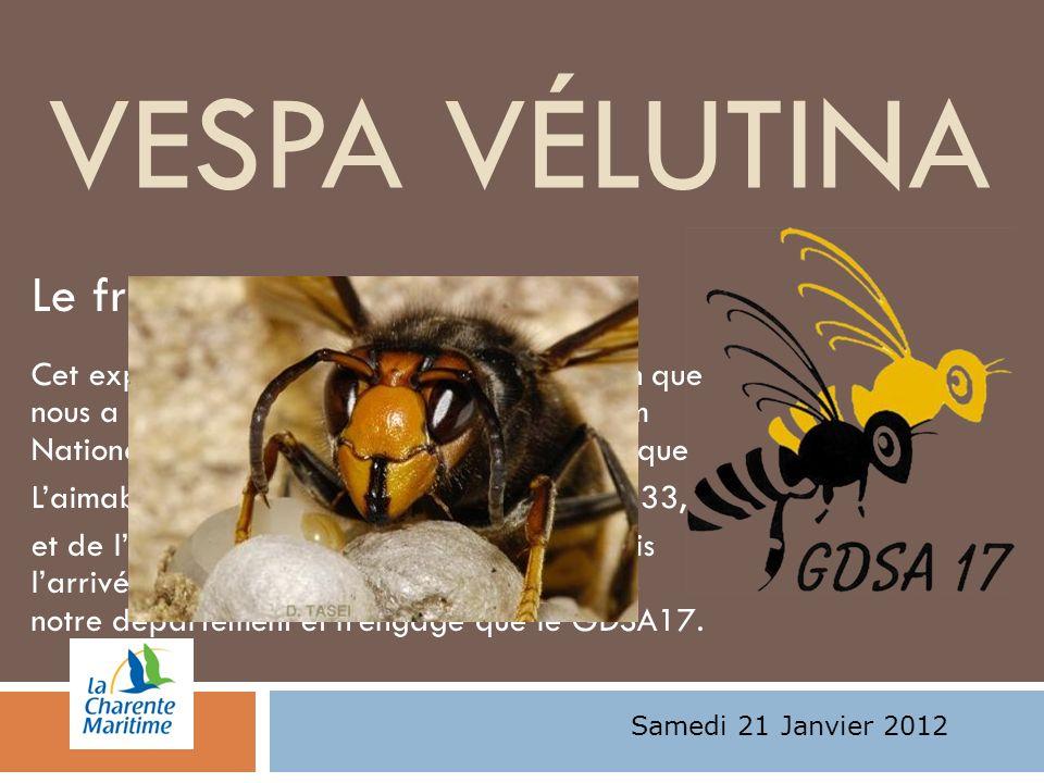 VESPA VÉLUTINA Le frelon asiatique: Cet exposé est le résumé dune présentation que nous a fait Mme Claire Villemant du Muséum National dHistoire Natur