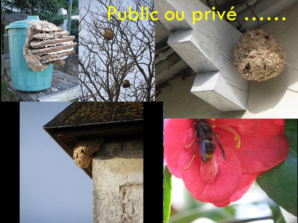 Public ou privé ……