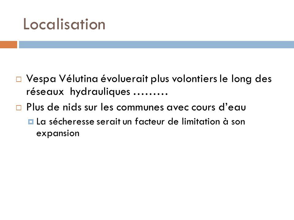 Localisation Vespa Vélutina évoluerait plus volontiers le long des réseaux hydrauliques ……… Plus de nids sur les communes avec cours deau La sécheress