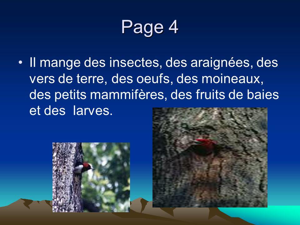 Page 4 Il mange des insectes, des araignées, des vers de terre, des oeufs, des moineaux, des petits mammifères, des fruits de baies et des larves.