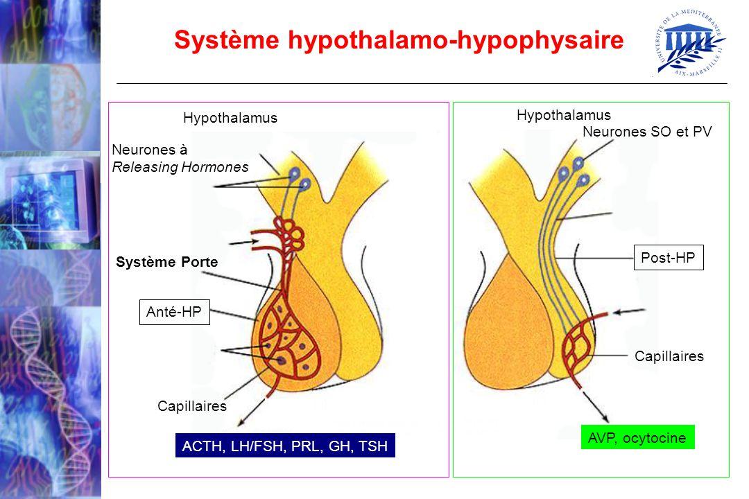 Système hypothalamo-hypophysaire Neurones SO et PV Post-HP Capillaires AVP, ocytocine ACTH, LH/FSH, PRL, GH, TSH Capillaires Neurones à Releasing Horm