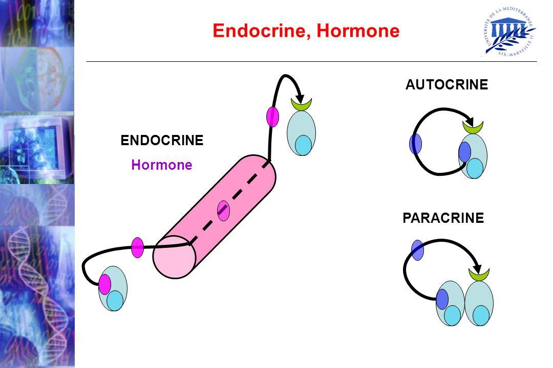 Testostérone Estradiol (E2) Estrone (E1) Androstenedione Origine des Estrogènes Tissu Adipeux Granulosa P450 Aromatase 17HSD