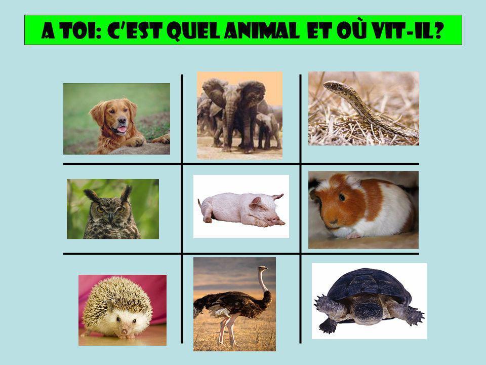 A toi: Cest quel animal et oÙ Vit-il?