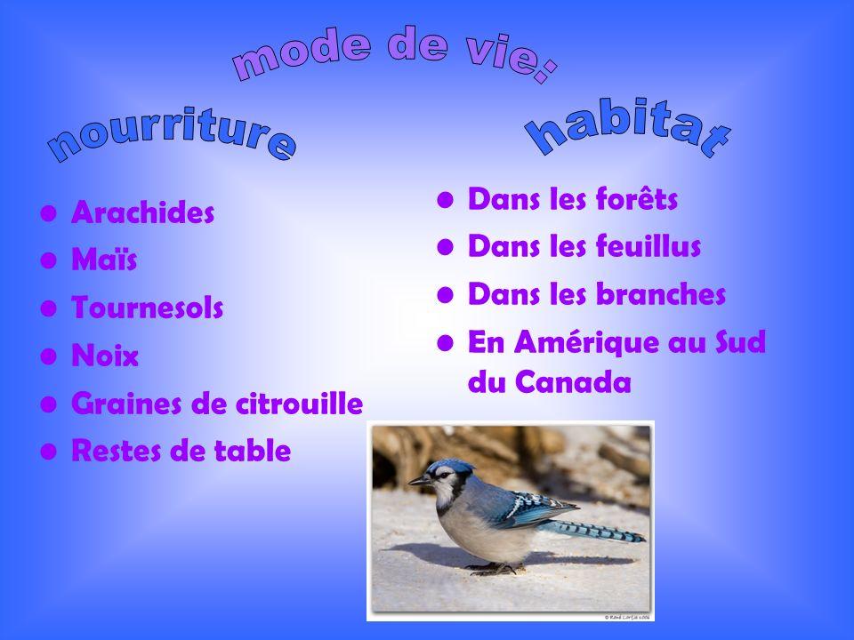 Arachides Maïs Tournesols Noix Graines de citrouille Restes de table Dans les forêts Dans les feuillus Dans les branches En Amérique au Sud du Canada