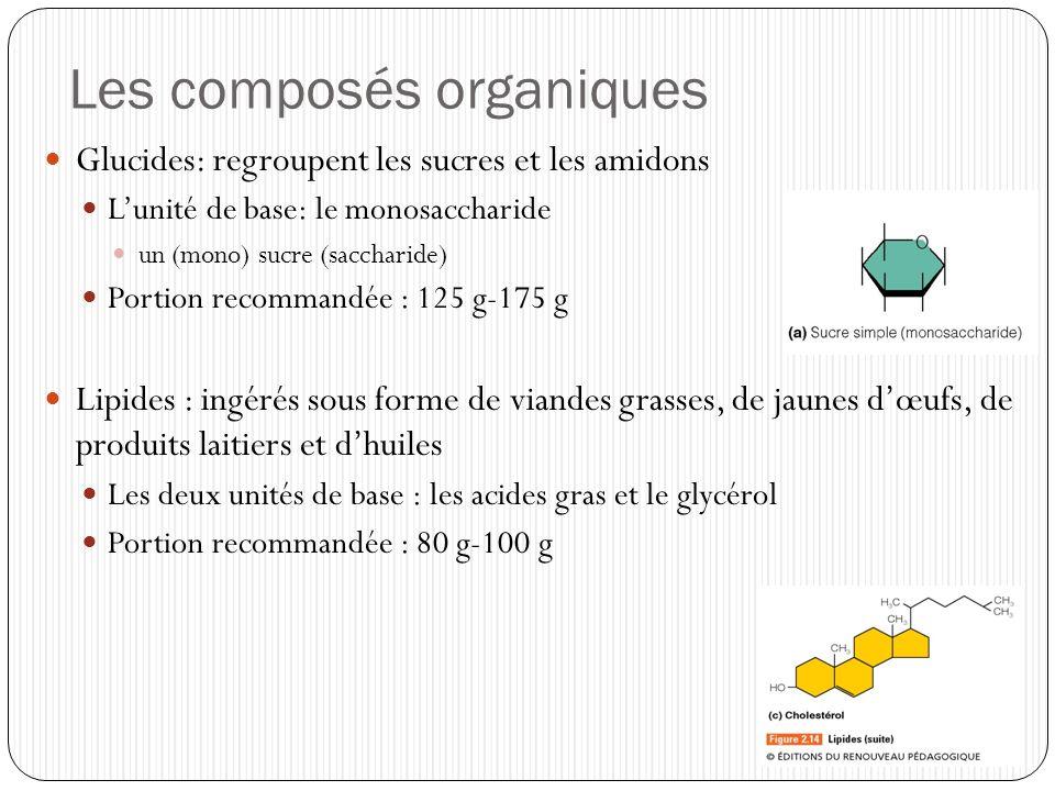 Les composés organiques Protéines : soit dorigine animale (œufs, produits laitiers, viandes, poissons, crustacés) soit dorigine végétale (céréales, légumineuses, noix) Lunité de base : les acides aminées Portion : 0,8g/Kg