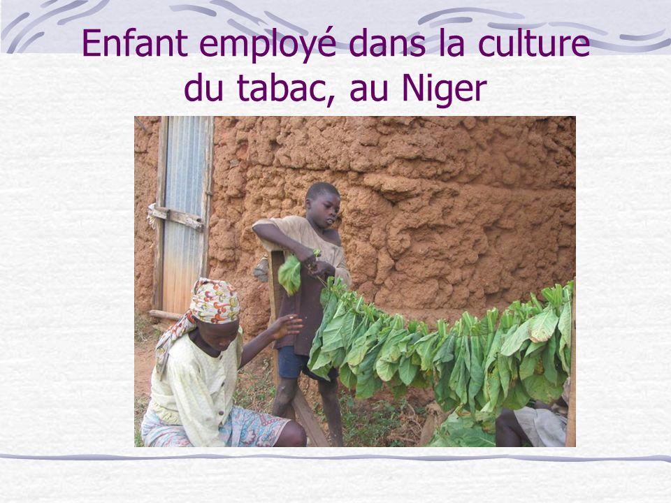 Enfant employé dans la culture du tabac, au Niger