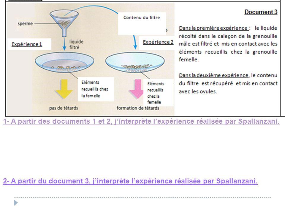 1- A partir des documents 1 et 2, jinterprète lexpérience réalisée par Spallanzani. 2- A partir du document 3, jinterprète lexpérience réalisée par Sp