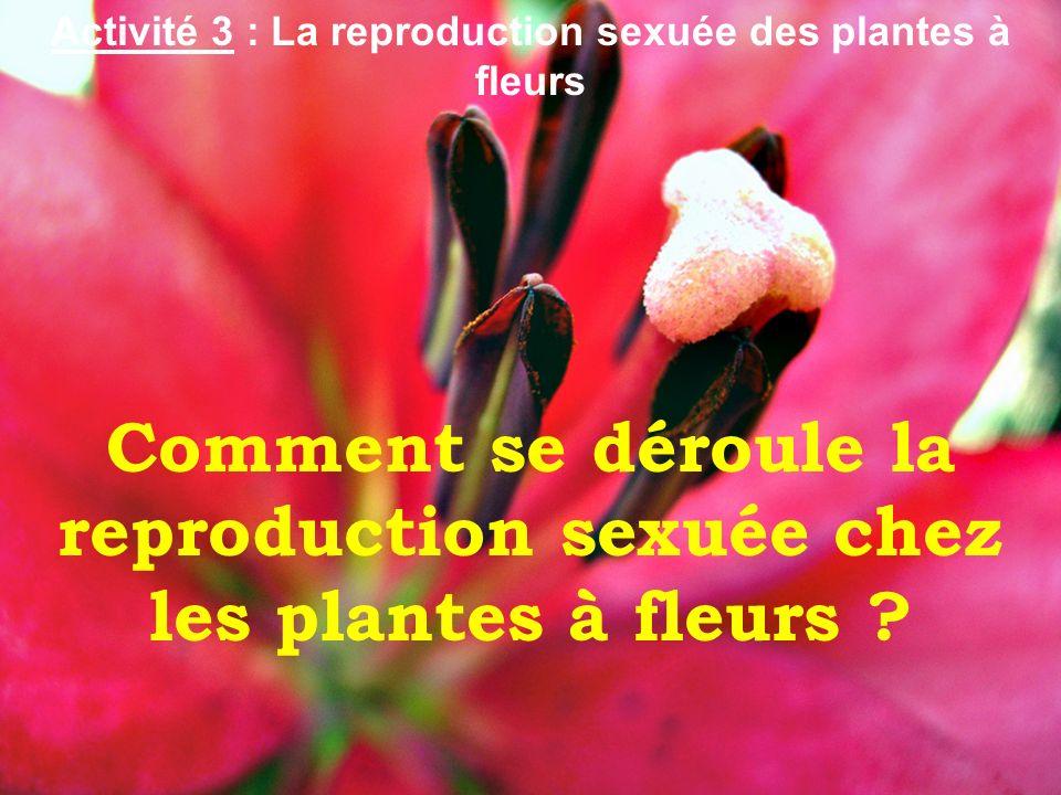 Comment se déroule la reproduction sexuée chez les plantes à fleurs ? Activité 3 : La reproduction sexuée des plantes à fleurs
