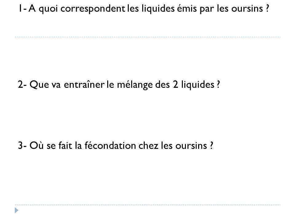 1- A quoi correspondent les liquides émis par les oursins ? 2- Que va entraîner le mélange des 2 liquides ? 3- Où se fait la fécondation chez les ours