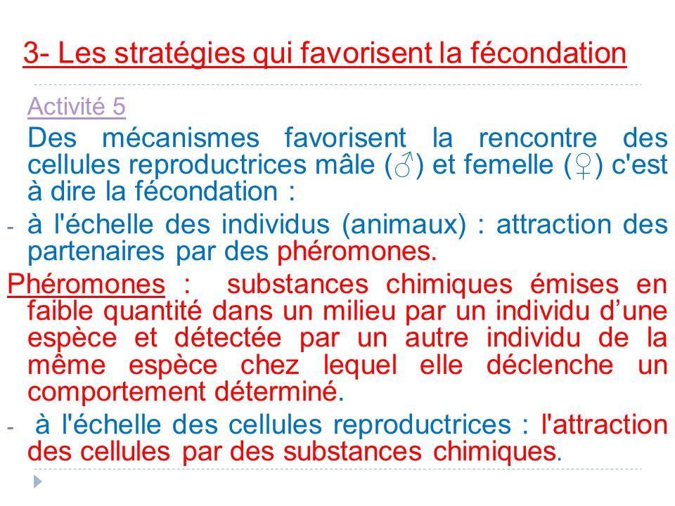 3- Les stratégies qui favorisent la fécondation Activité 5 Des mécanismes favorisent la rencontre des cellules reproductrices mâle () et femelle () c'