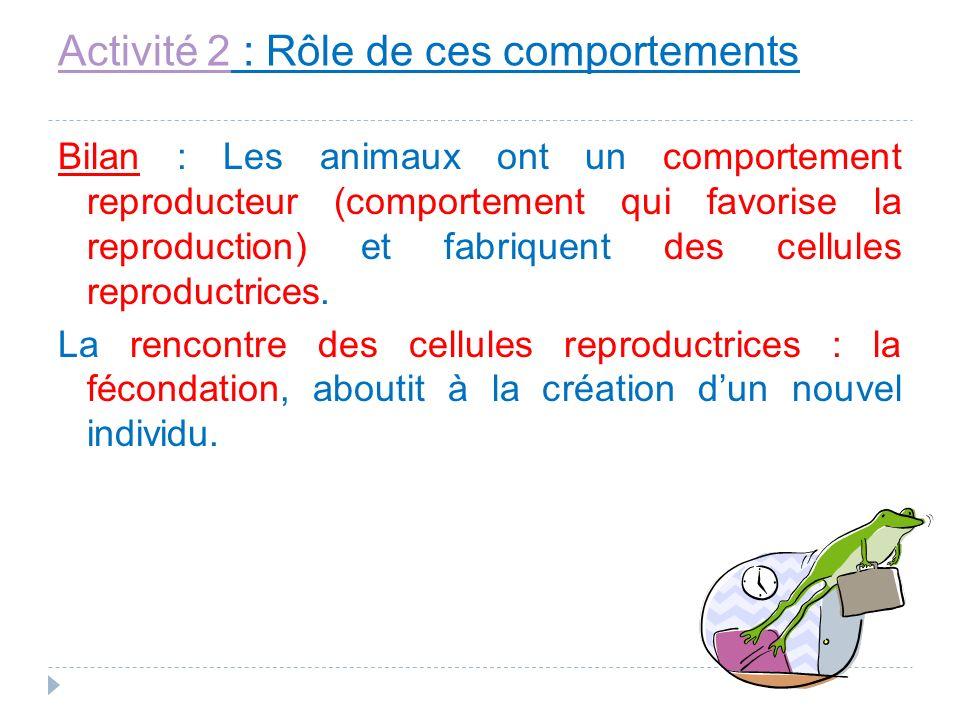 Activité 2Activité 2 : Rôle de ces comportements Bilan : Les animaux ont un comportement reproducteur (comportement qui favorise la reproduction) et f