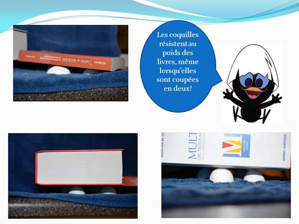 Les coquilles résistent au poids des livres, même lorsquelles sont coupées en deux!