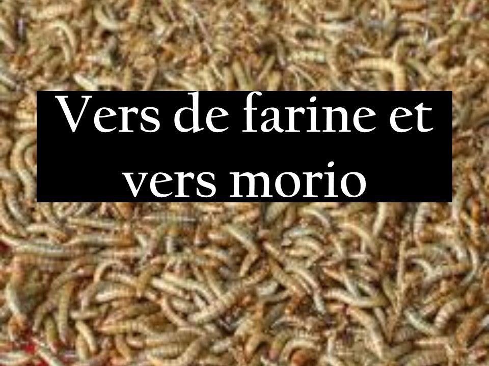 Vers de farine et vers morio