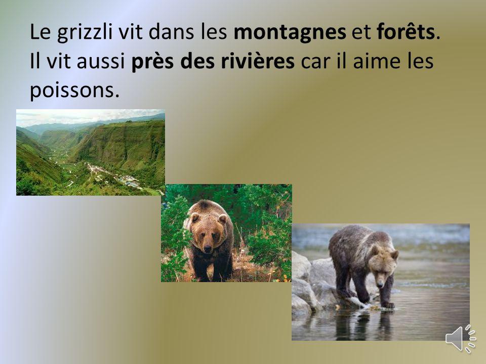 La couleur de la fourrure du grizzli peut être beige, brun, ou brun foncé.