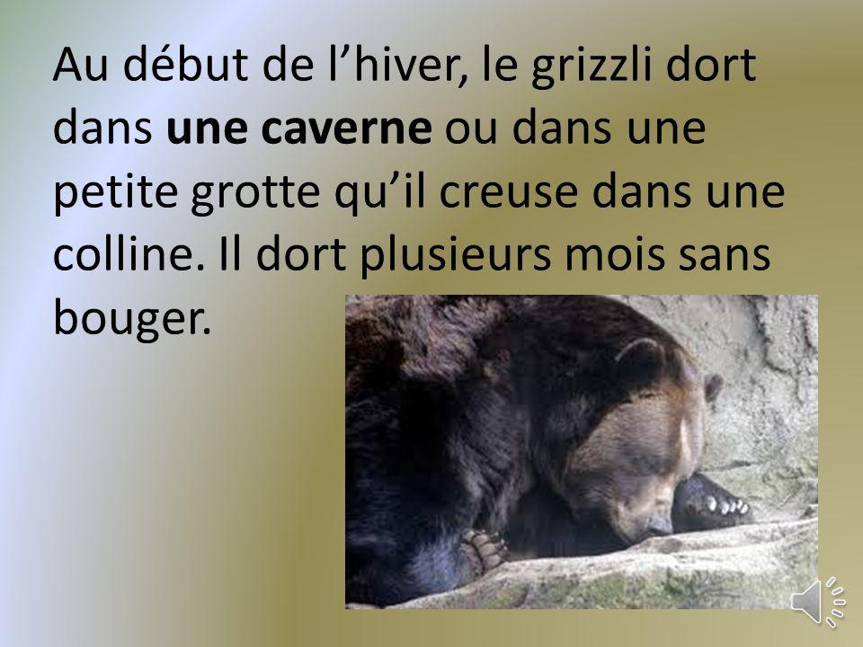 Le grizzli mange les plantes et les animaux. Voici des examples de ce quil mange. du poisson des plantes des insects baie les oeufs les cerfs