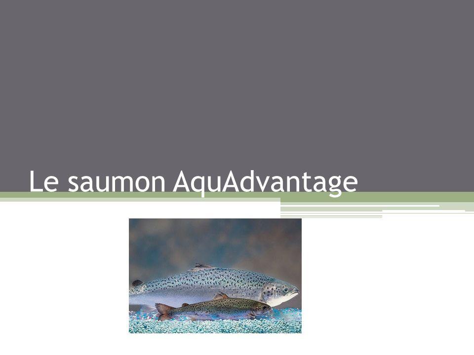 Sommaire : Présentation des différents types de saumons Historique de la transgénèse La société Aquabounty Comment est créé ce saumon OGM .