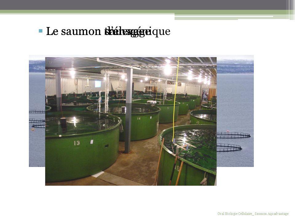 Le saumon sauvage Oral Biologie Cellulaire_ Saumon Aquadvantage Le saumon délevage Le saumon transgénique