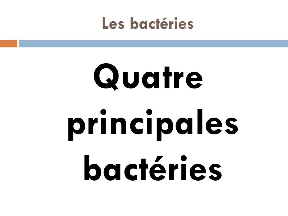 Les bactéries Quatre principales bactéries