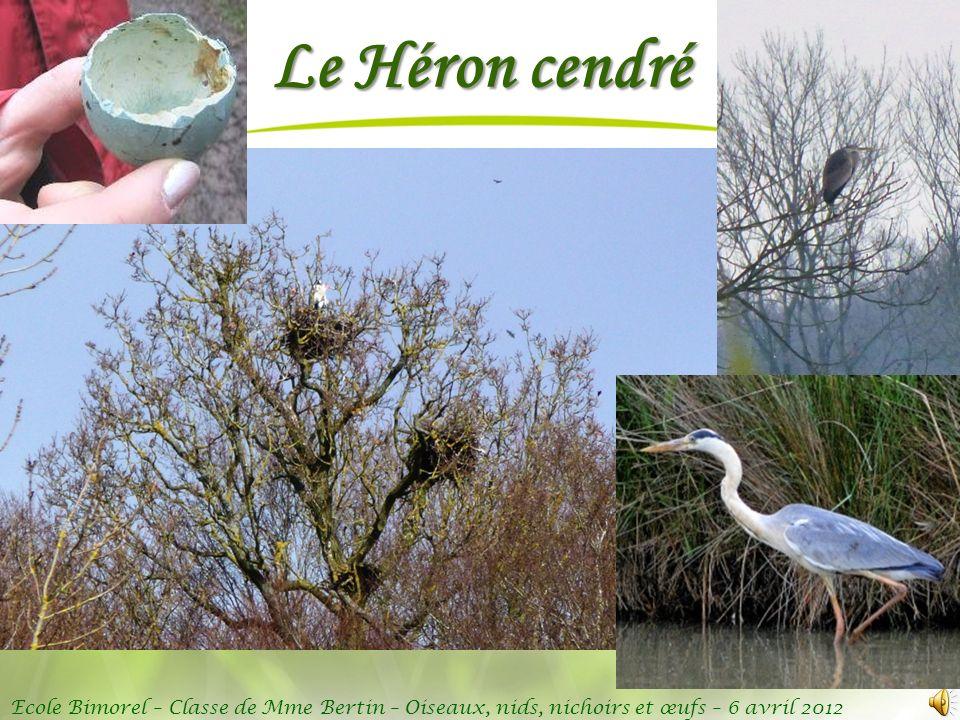 Ecole Bimorel – Classe de Mme Bertin – Oiseaux, nids, nichoirs et œufs – 6 avril 2012 Le Héron cendré