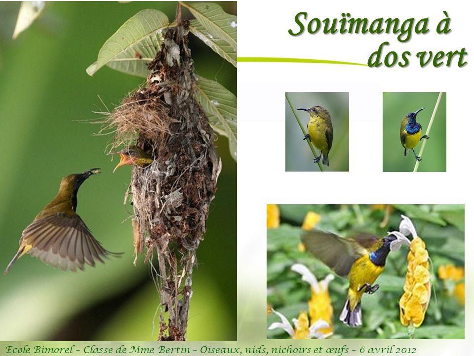 Ecole Bimorel – Classe de Mme Bertin – Oiseaux, nids, nichoirs et œufs – 6 avril 2012 Souïmanga à dos vert