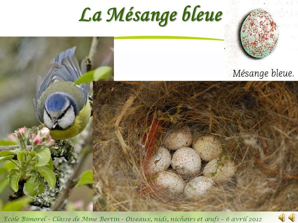 Ecole Bimorel – Classe de Mme Bertin – Oiseaux, nids, nichoirs et œufs – 6 avril 2012 La Mésange bleue