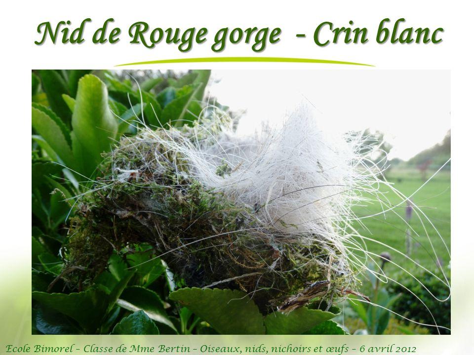 Ecole Bimorel – Classe de Mme Bertin – Oiseaux, nids, nichoirs et œufs – 6 avril 2012 Nid de Rouge gorge - Crin blanc
