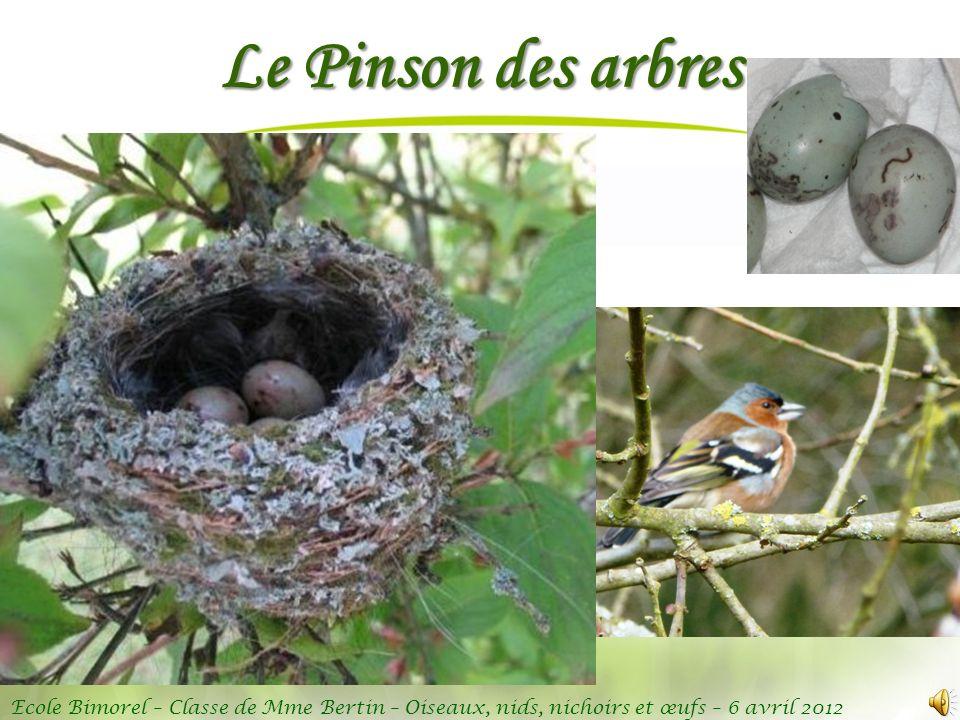 Ecole Bimorel – Classe de Mme Bertin – Oiseaux, nids, nichoirs et œufs – 6 avril 2012 Le Pinson des arbres