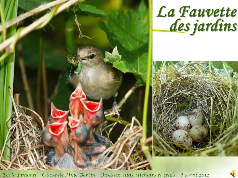Ecole Bimorel – Classe de Mme Bertin – Oiseaux, nids, nichoirs et œufs – 6 avril 2012 La Fauvette des jardins