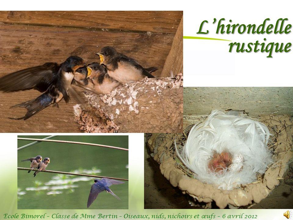 Ecole Bimorel – Classe de Mme Bertin – Oiseaux, nids, nichoirs et œufs – 6 avril 2012 Lhirondelle rustique