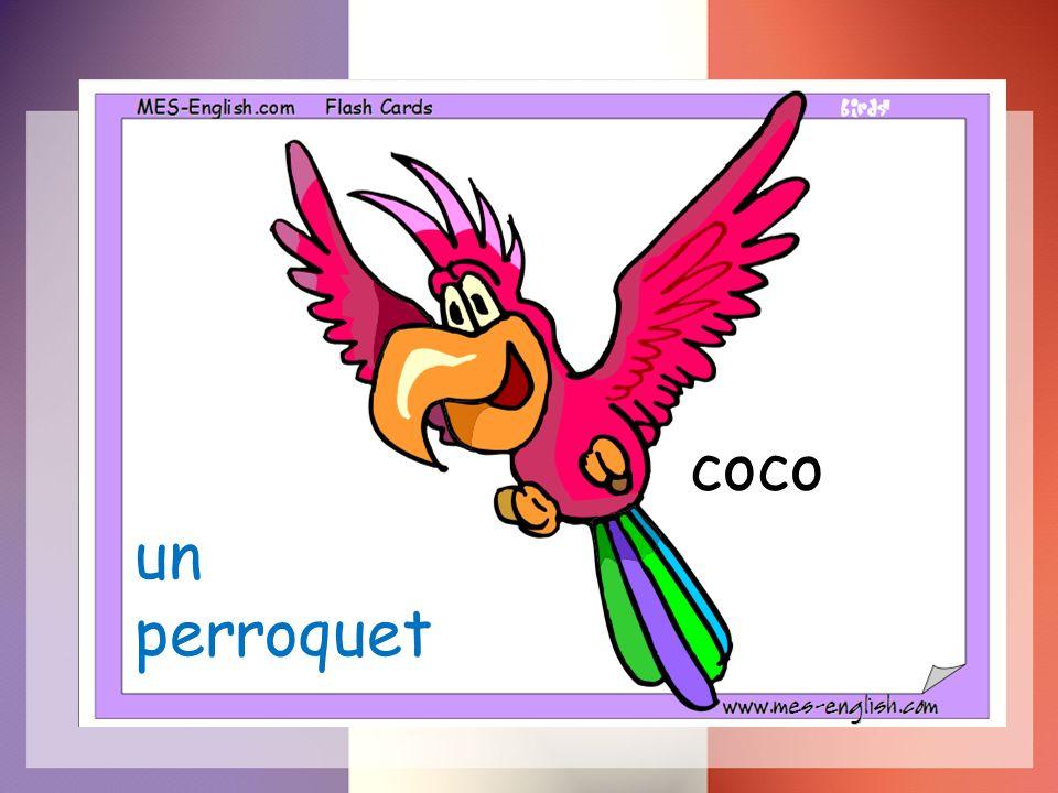 un perroquet coco