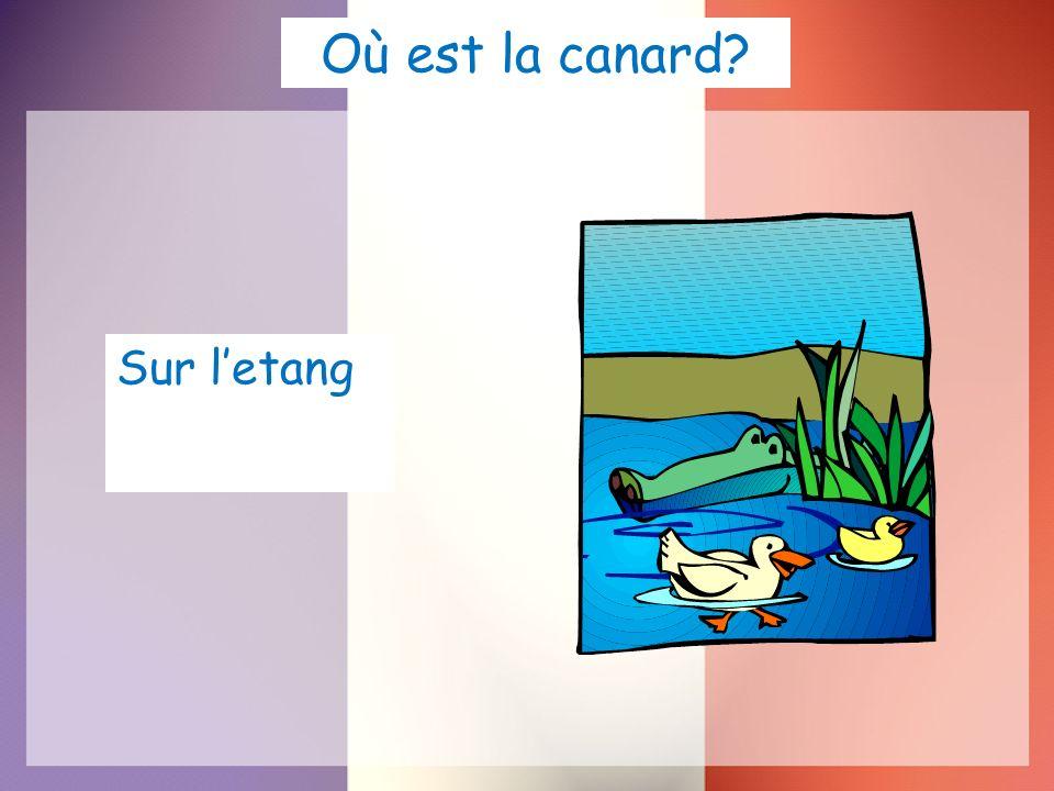 Où est la canard? Sur letang
