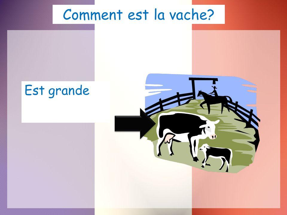 Comment est la vache? Est grande