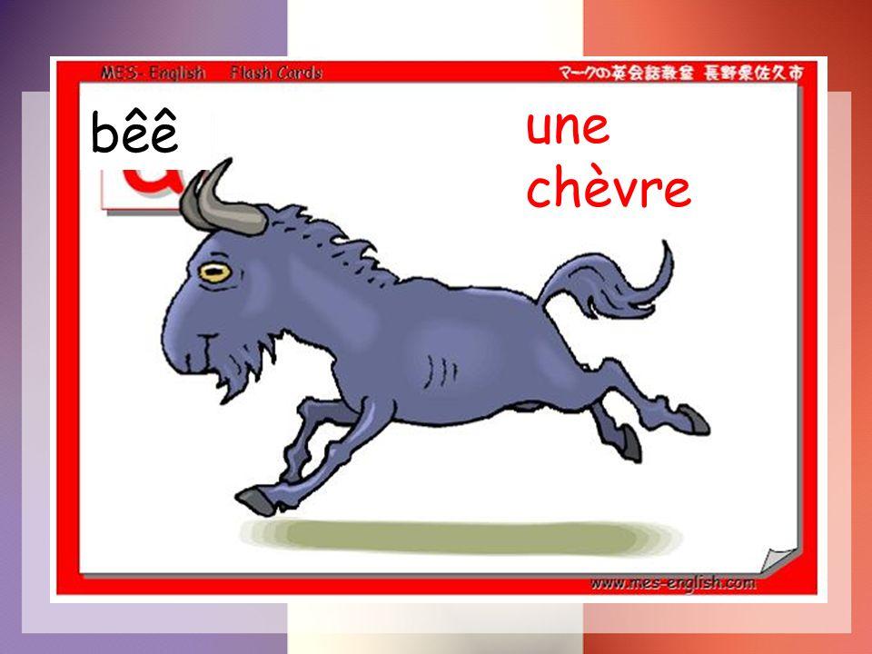 une chèvre bêê