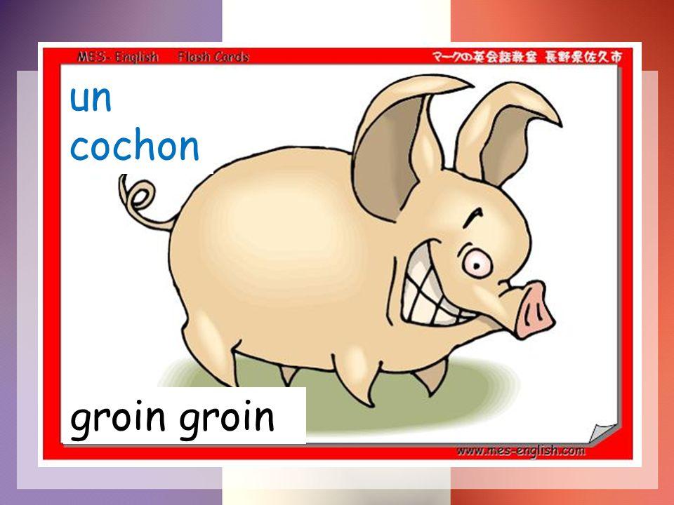 un cochon groin
