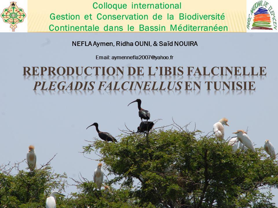 NEFLA Aymen, Ridha OUNI, & Saïd NOUIRA Email: aymennefla2007@yahoo.fr Colloque international Gestion et Conservation de la Biodiversité Continentale dans le Bassin Méditerranéen