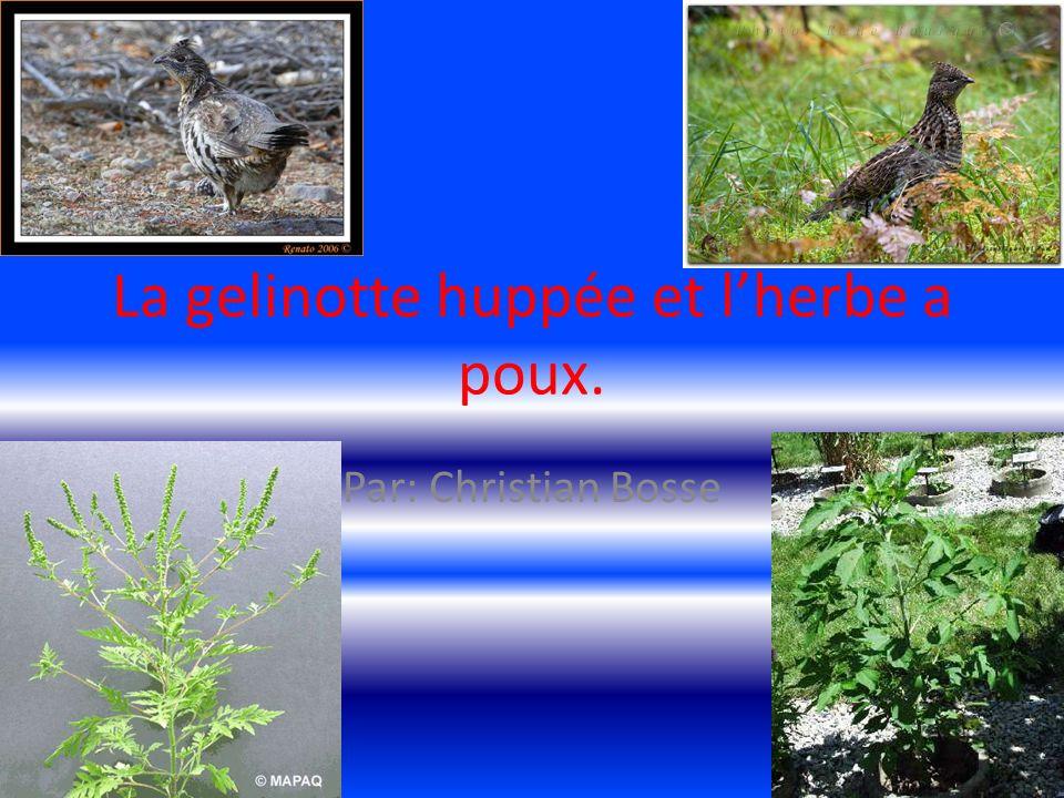 Nom scientifique Le nom scientifique de la gelinotte huppée est ( Bonasa umbellus. )