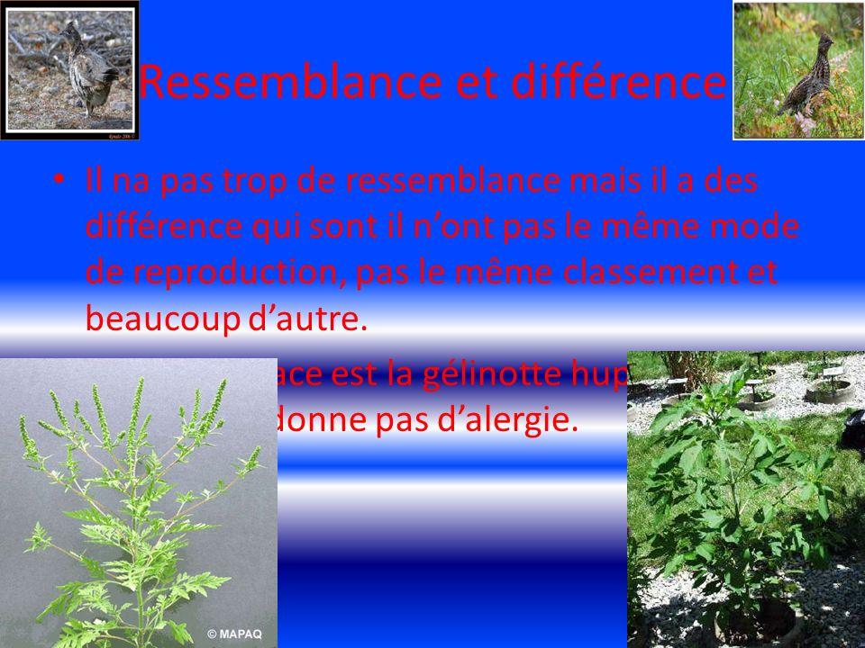 Mes référence www.wikipédia.com www.google.com www.santéquebec.com www.mercidemavoirécouter.com