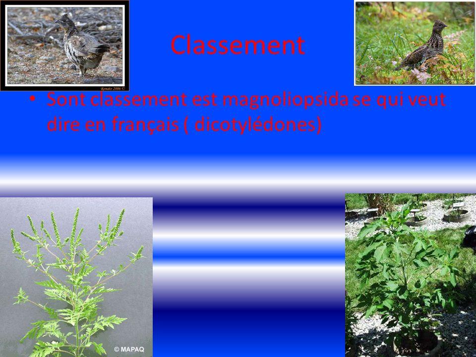 La reproduction La reproduction de lherbe a poux est simple chaque plant peut produire 3000 graine qui pourront a leur tour produire 600 plant lannée suivante.