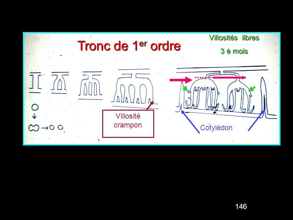 146 Septa Tronc de 1 er ordre Villosité crampon Villosités libres 3 è mois Cotylédon