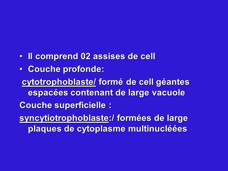 Il comprend 02 assises de cellIl comprend 02 assises de cell Couche profonde:Couche profonde: cytotrophoblaste/ formé de cell géantes espacées contena