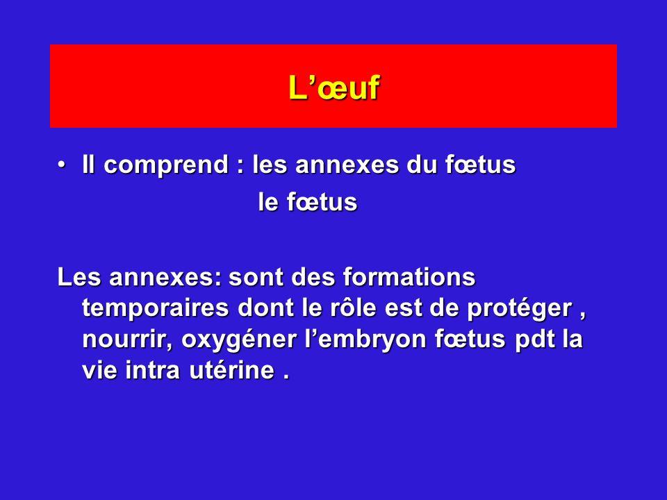 Lœuf Il comprend : les annexes du fœtusIl comprend : les annexes du fœtus le fœtus le fœtus Les annexes: sont des formations temporaires dont le rôle