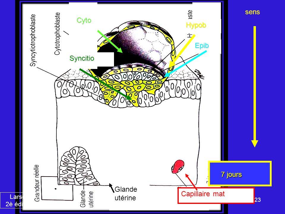 23 Cyto Syncitio Hypob Epib Glande utérine Capillaire mat 7 jours sens Larsen 2è édition